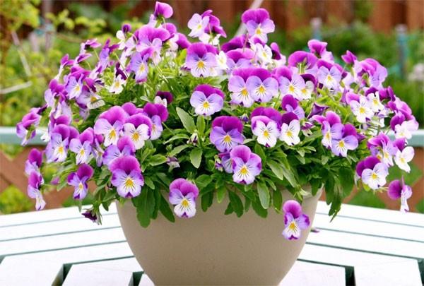 Diệt sâu, bọ cho các chậu hoa cây cảnh