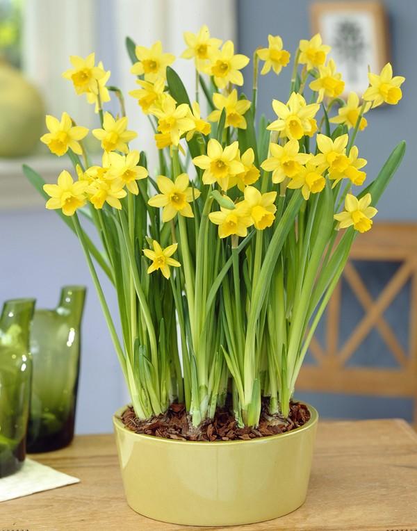Bón phân cho các chậu hoa cây cảnh trong nhà